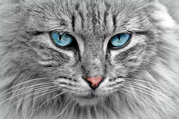 Plaque chien chat